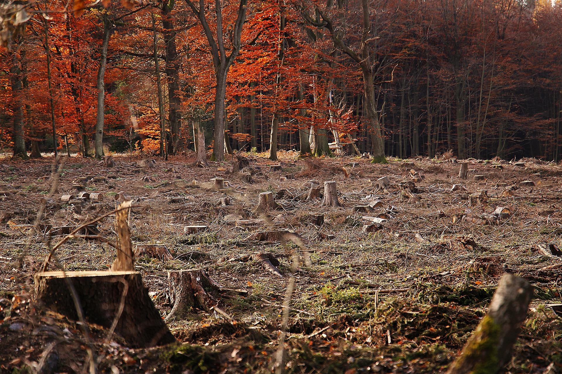 Rodung eines Waldes