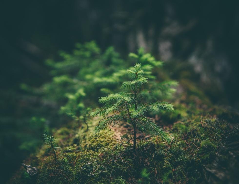 Baum Sprößling im Wald